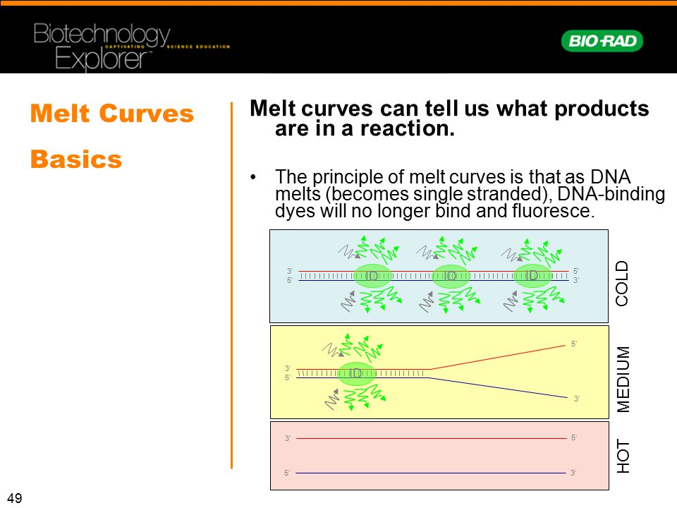 49 Melt Curves Basics Melt curves can tell us what products are in a reaction. The principle of melt curves is that as DNA melts (becomes single stran
