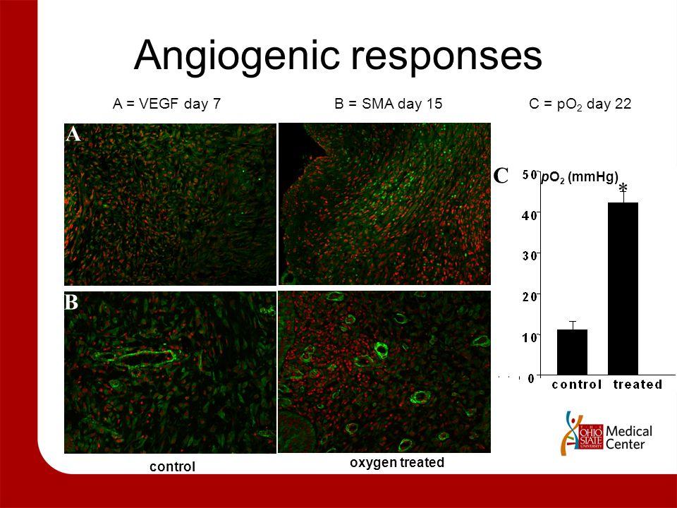 Angiogenic responses control oxygen treated A B 5 6 C pO 2 (mmHg)  A = VEGF day 7 B = SMA day 15 C = pO 2 day 22