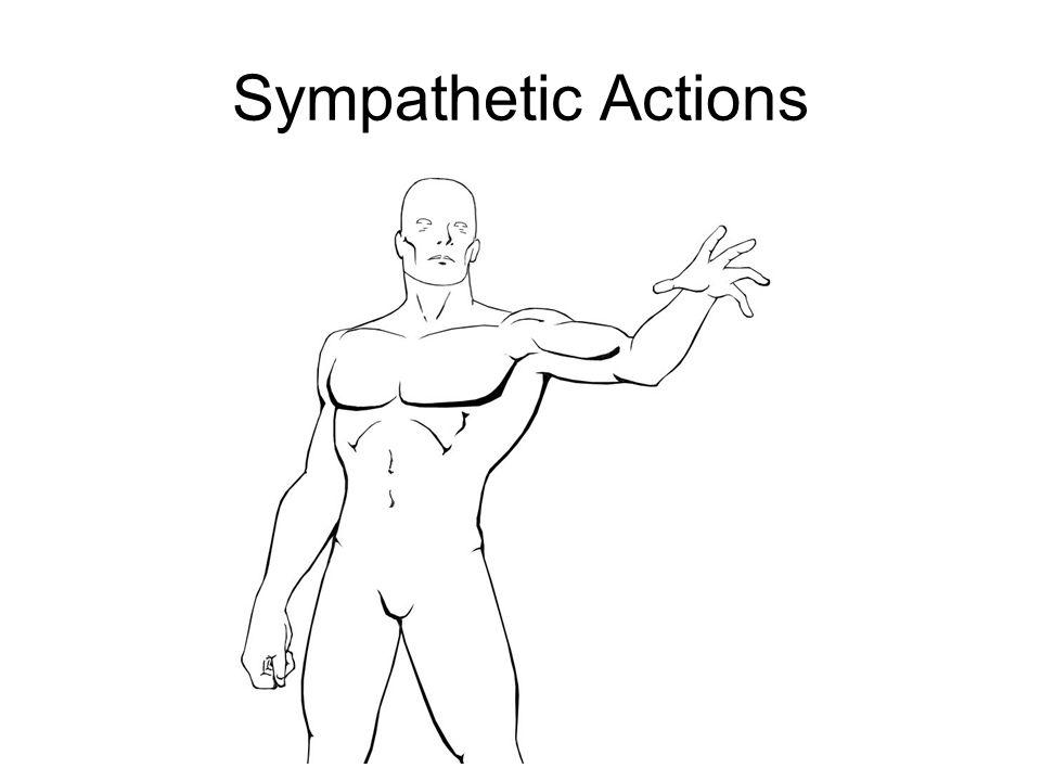 Sympathetic Actions