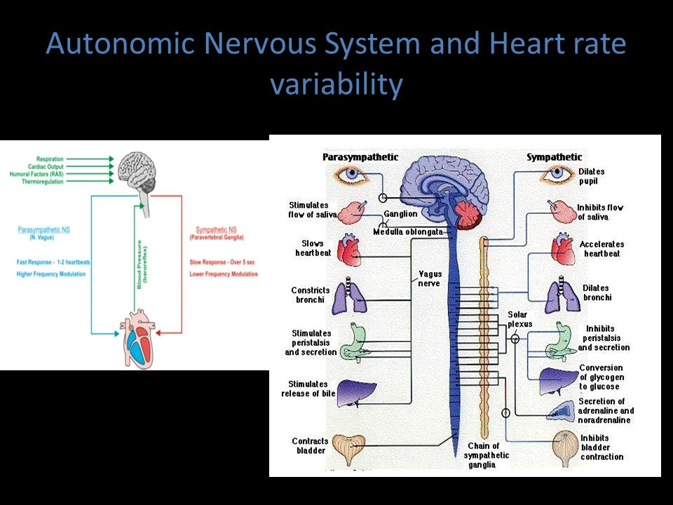 Autonomic Nervous System and Heart rate variability