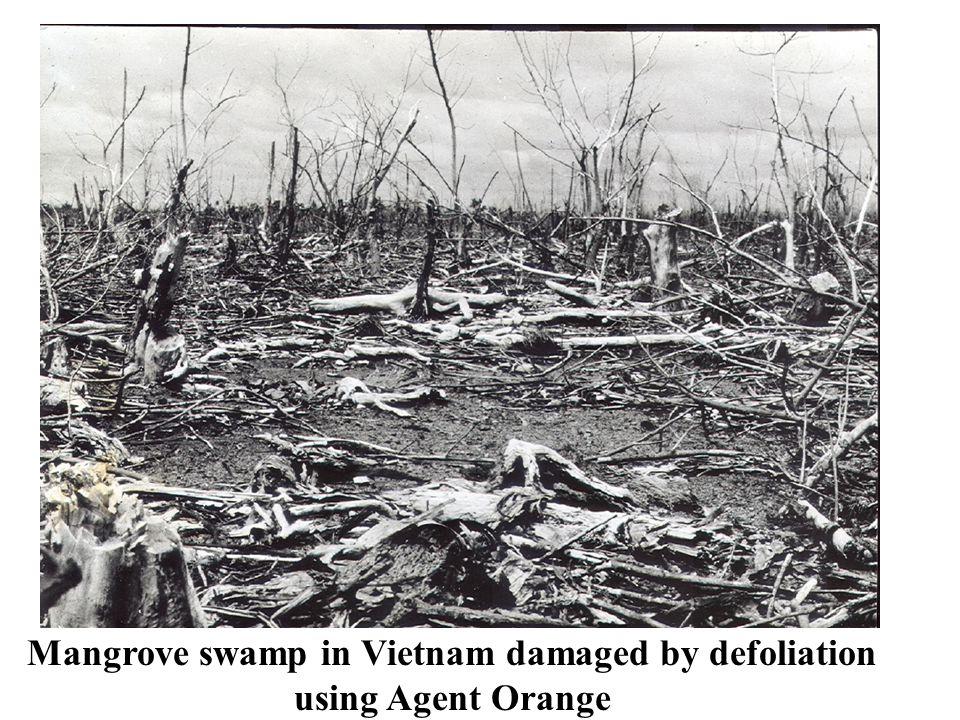 Mangrove swamp in Vietnam damaged by defoliation using Agent Orange
