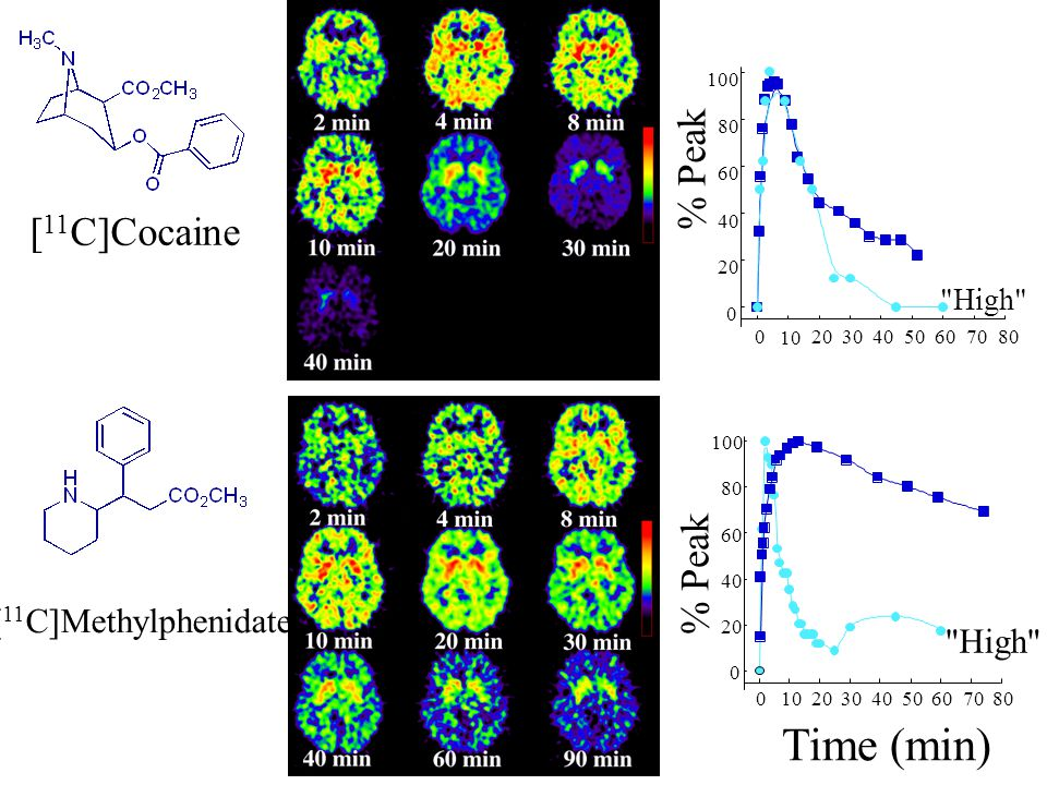 Positron Emission Tomography (PET) studies show that methylphenidate acts predominantly in the striatum of the human brain where it binds to DA transp