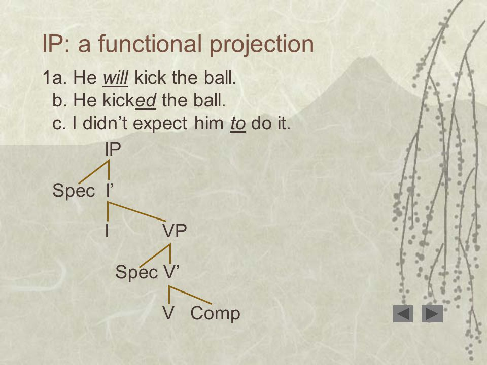 IP: a functional projection 1a. He will kick the ball.