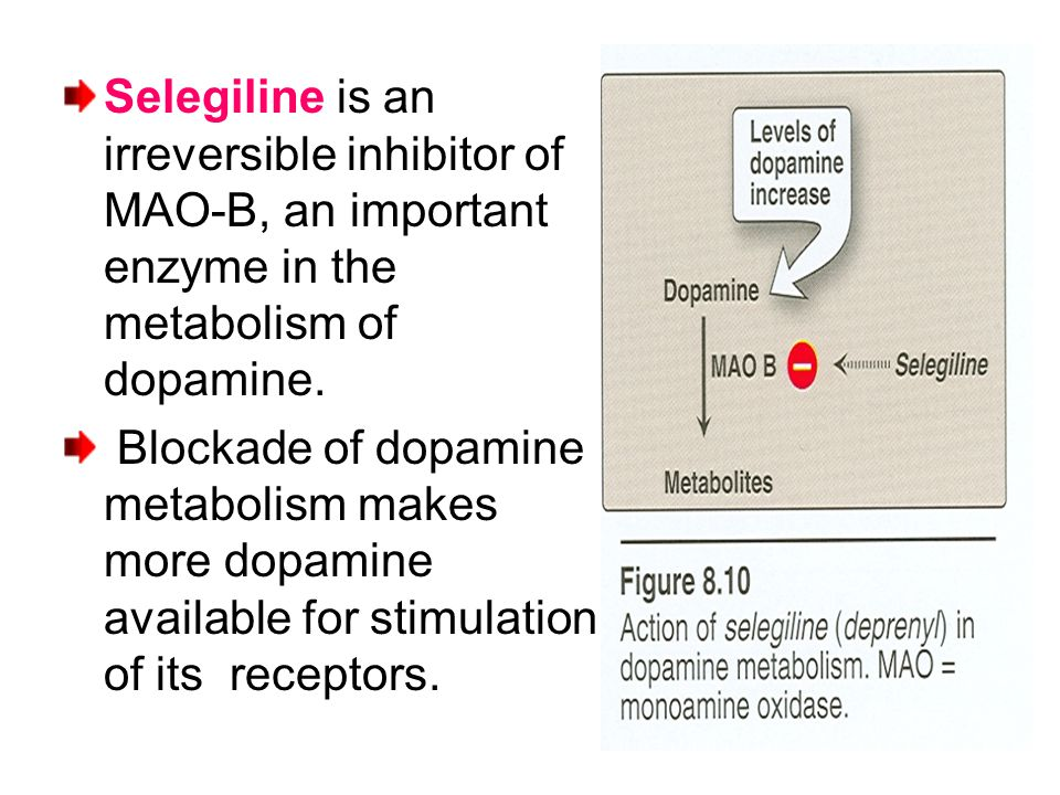 Selegiline is an irreversible inhibitor of MAO-B, an important enzyme in the metabolism of dopamine.