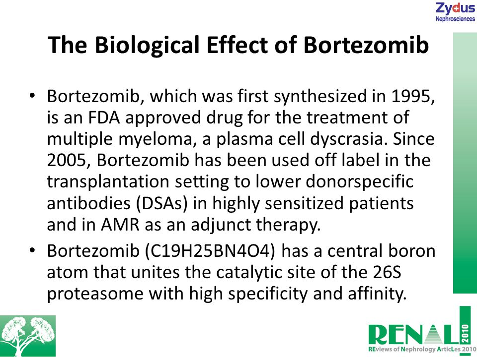 The Biological Effect of Bortezomib Bortezomib, which was first synthesized in 1995, is an FDA approved drug for the treatment of multiple myeloma, a plasma cell dyscrasia.