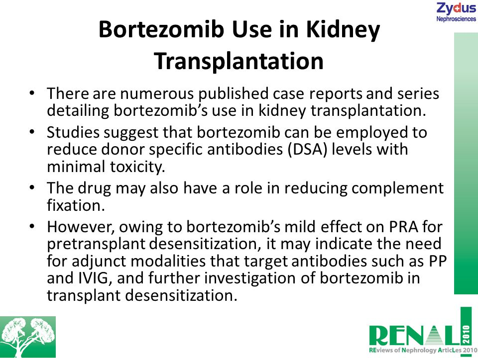 Bortezomib Use in Kidney Transplantation There are numerous published case reports and series detailing bortezomib's use in kidney transplantation.