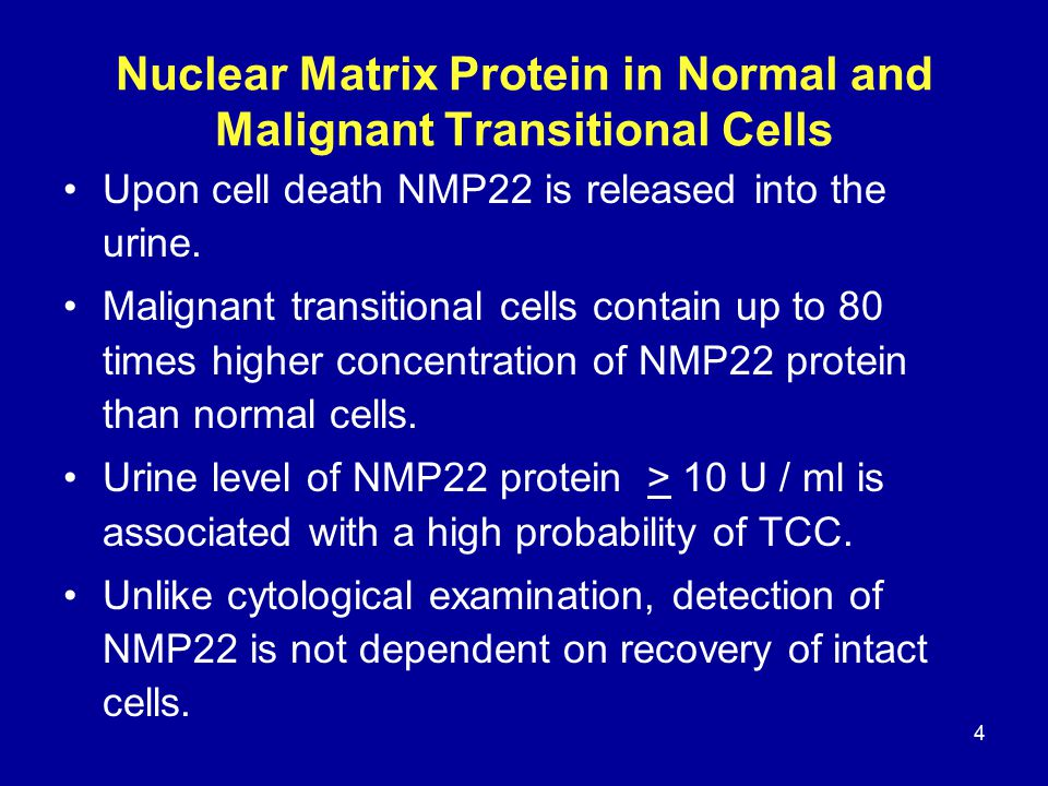 4 Nuclear Matrix Protein in Normal and Malignant Transitional Cells Upon cell death NMP22 is released into the urine.