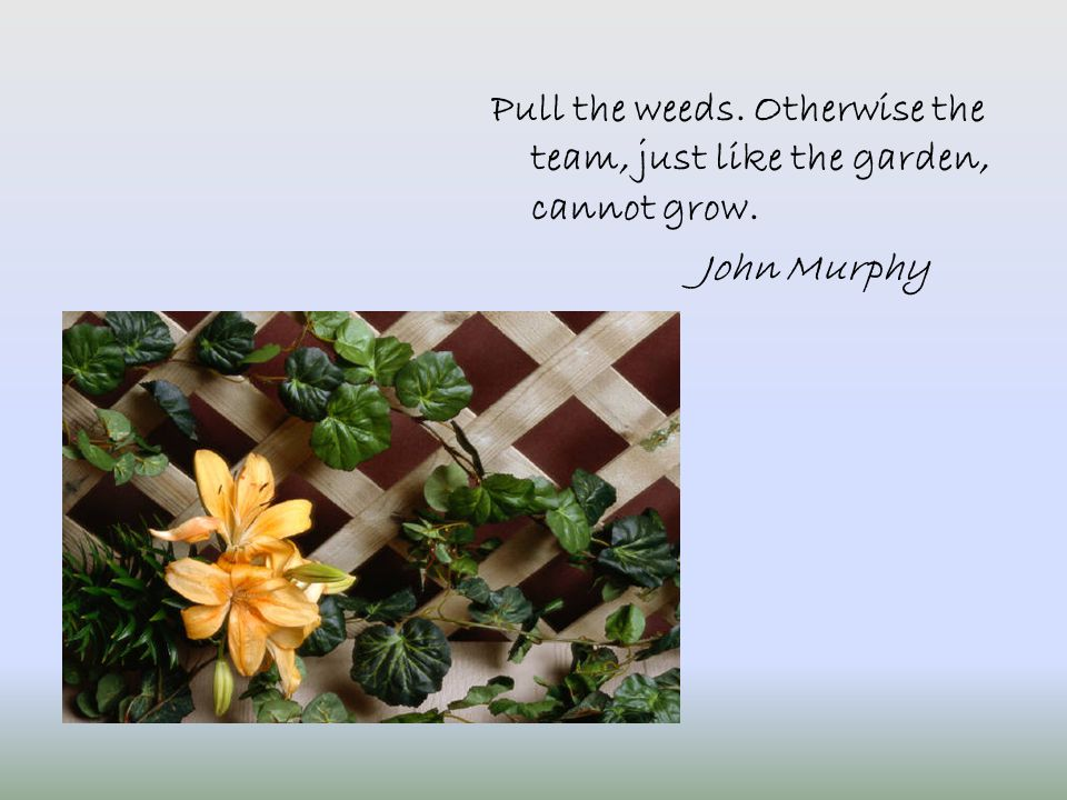 Pull the weeds. Otherwise the team, just like the garden, cannot grow. John Murphy