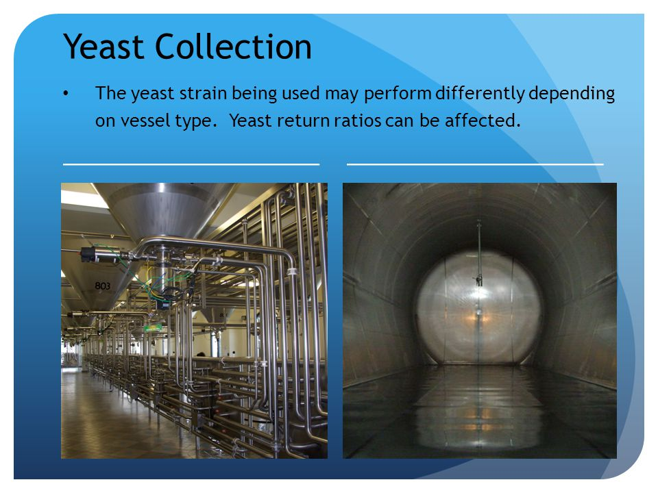 Yeast Collection The yeast strain being used may perform differently depending on vessel type.