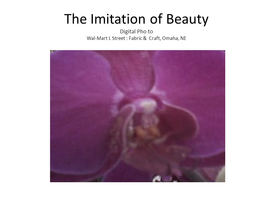 The Imitation of Beauty Digital Pho to Wal-Mart L Street : Fabric & Craft, Omaha, NE