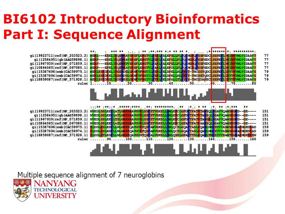BI6102 Introductory Bioinformatics Part I: Sequence Alignment Multiple sequence alignment of 7 neuroglobins