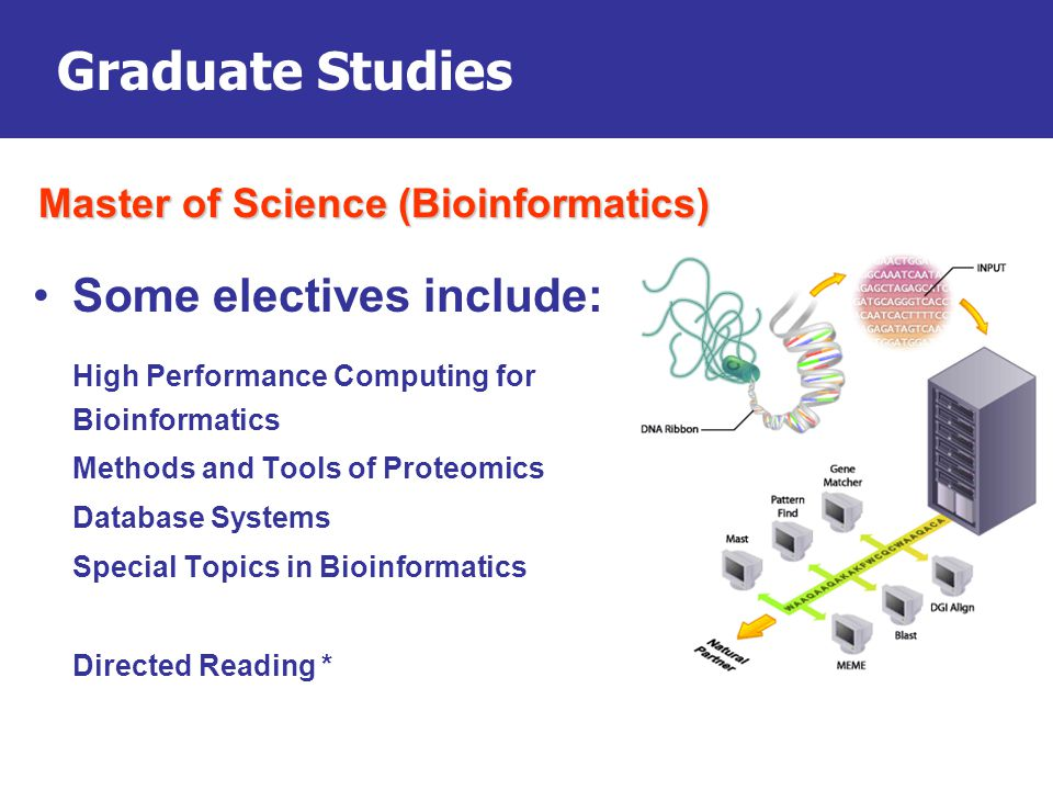 Graduate Studies Some electives include: High Performance Computing for Bioinformatics Methods and Tools of Proteomics Database Systems Special Topics in Bioinformatics Directed Reading * Master of Science (Bioinformatics)