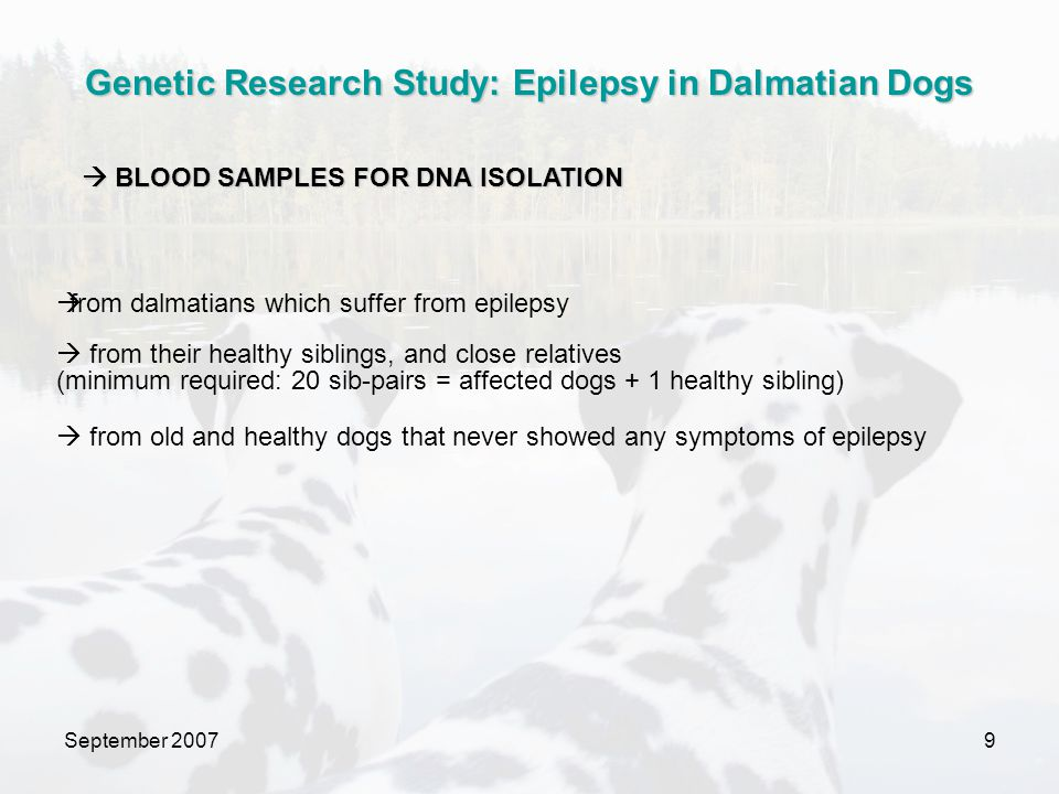 September 200710 blood DNA SNP array chips affected dog healthy sibling SNP arrays are:  a way to detect genetic variations within a population  used to study complete loss of an allele or from an increase in copy number of one allele  making it possible to detect the smallest mistakes in genetic information  containing the complete genetic information of dogs.