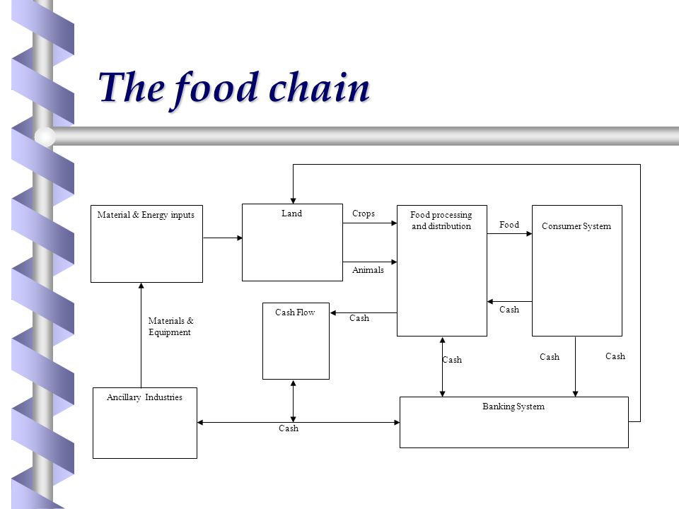 The food chain Materials & Equipment Cash Food Animals Crops Material & Energy inputs Land Food processing and distributionConsumer System Banking System Ancillary Industries Cash Flow