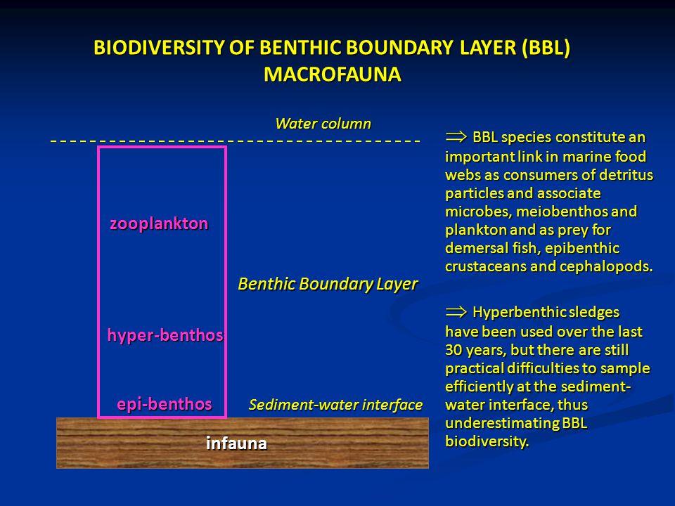 epi-benthos Sediment-water interface Benthic Boundary Layer infauna Water column BIODIVERSITY OF BENTHIC BOUNDARY LAYER (BBL) MACROFAUNA  Hyperbenthi