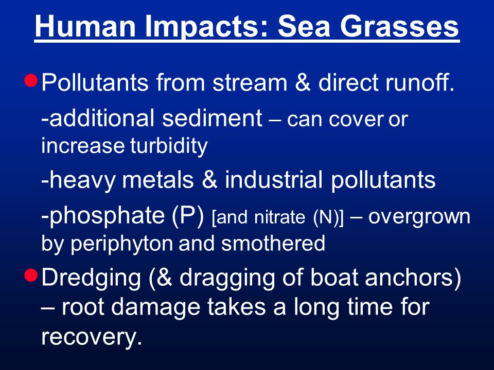 Human Impacts: Sea Grasses  Pollutants from stream & direct runoff.