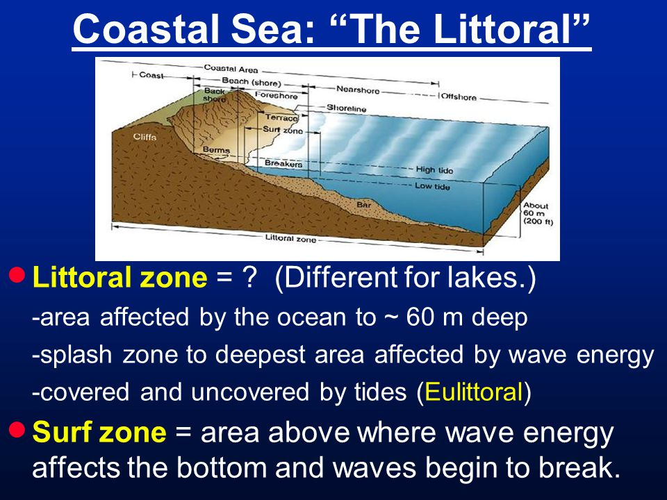 Coastal Sea: The Littoral  Littoral zone = .
