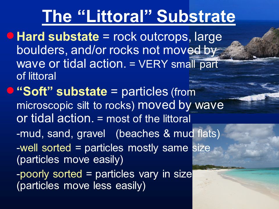 The Littoral Substrate  Hard substate = rock outcrops, large boulders, and/or rocks not moved by wave or tidal action.