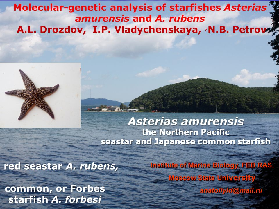 Molecular-genetic analysis of starfishes Asterias amurensis and A. rubens A.L. Drozdov, I.P. Vladychenskaya,, N.B. Petrov red seastar A. rubens, red s