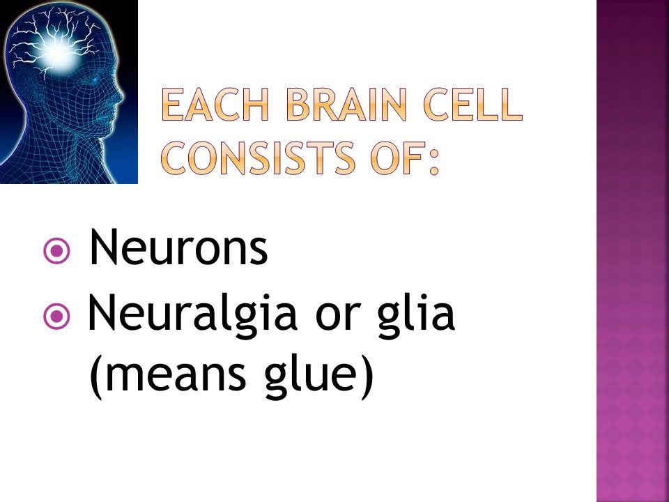  Neurons  Neuralgia or glia (means glue)