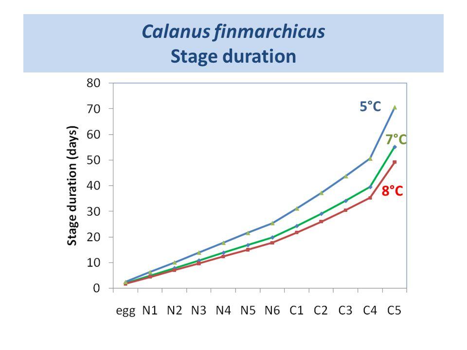 Calanus finmarchicus Stage duration 5°C 8°C 7°C