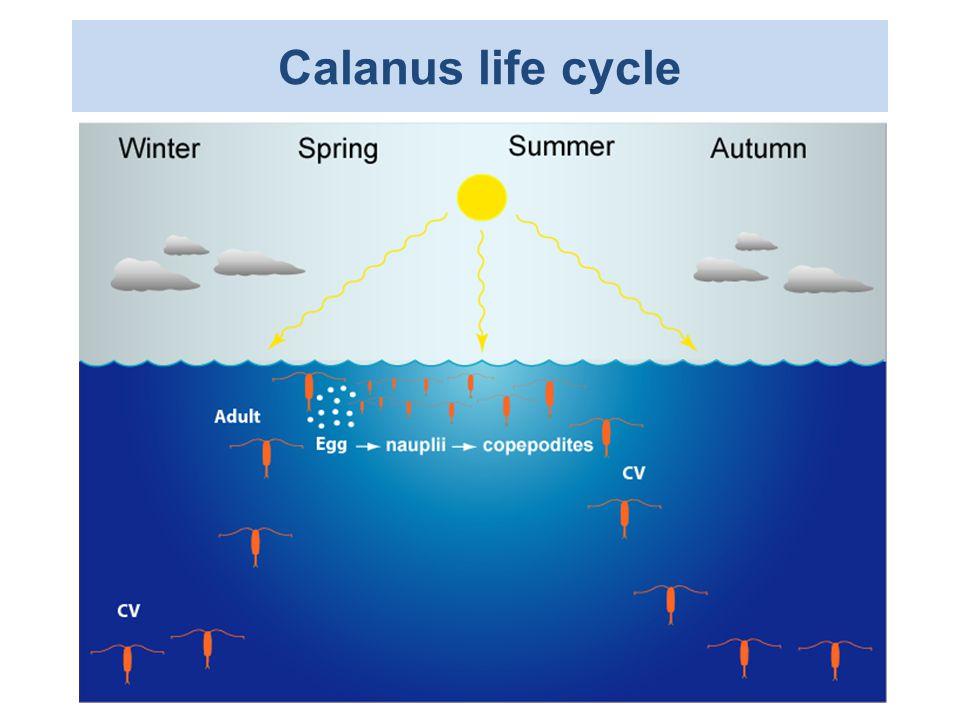 Calanus finmarchicus May 1993-2009