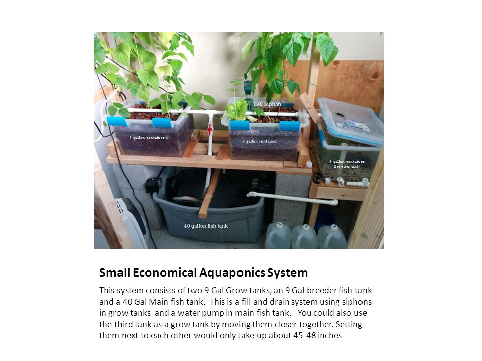 Small Economical Aquaponics System This system consists of two 9 Gal Grow tanks, an 9 Gal breeder fish tank and a 40 Gal Main fish tank.