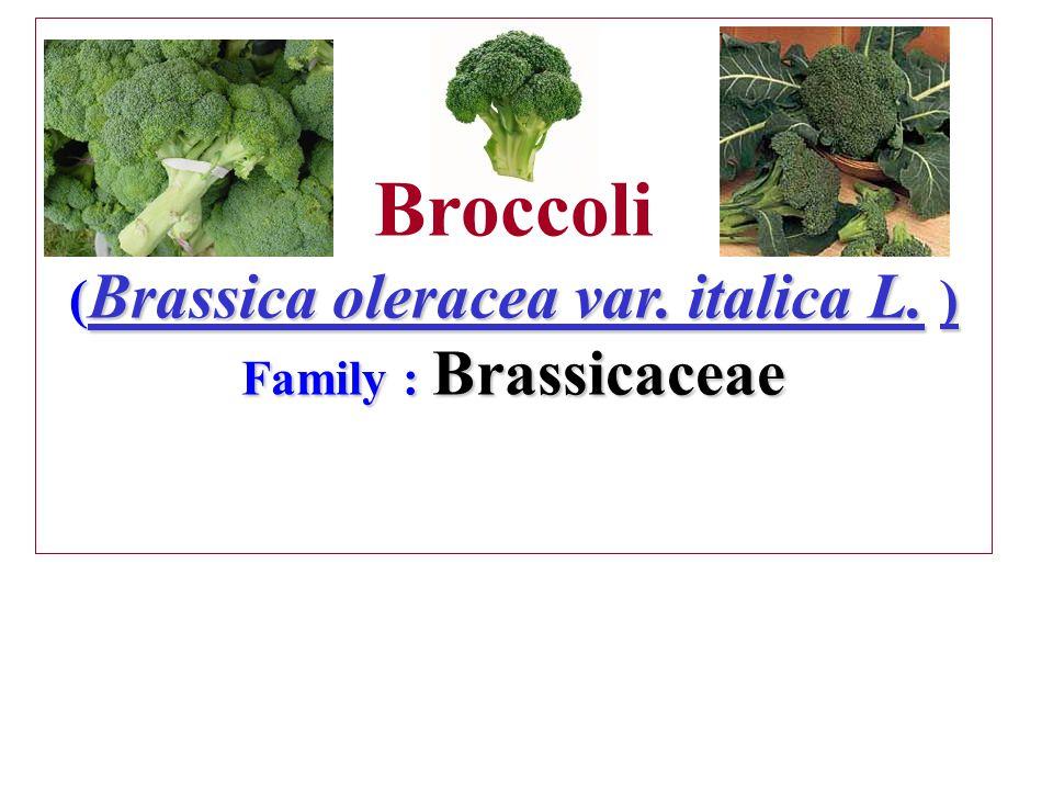 ( Brassica oleracea var.italica L. ) Family : Brassicaceae Broccoli ( Brassica oleracea var.