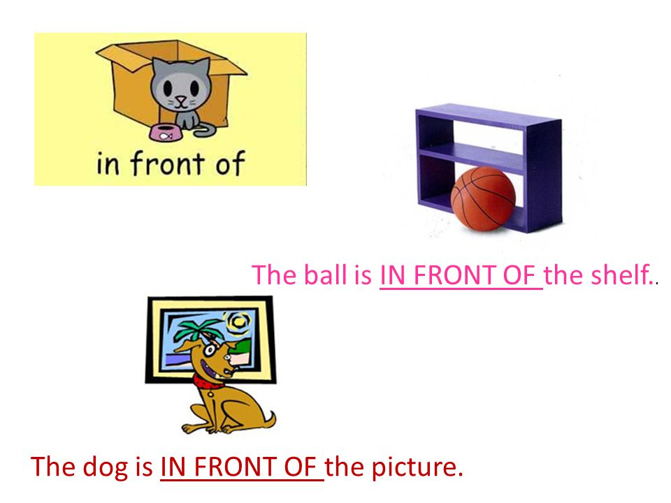 The ball is IN FRONT OF the shelf.. The dog is IN FRONT OF the picture.