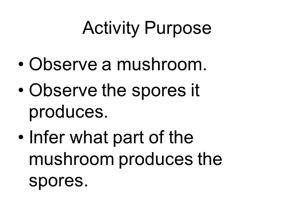 Activity Purpose Observe a mushroom. Observe the spores it produces.