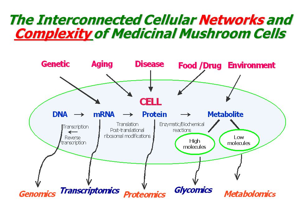 The Interconnected Cellular Networks and Complexity of Medicinal Mushroom Cells