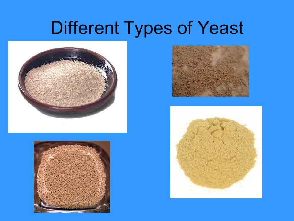 Different Types of Yeast