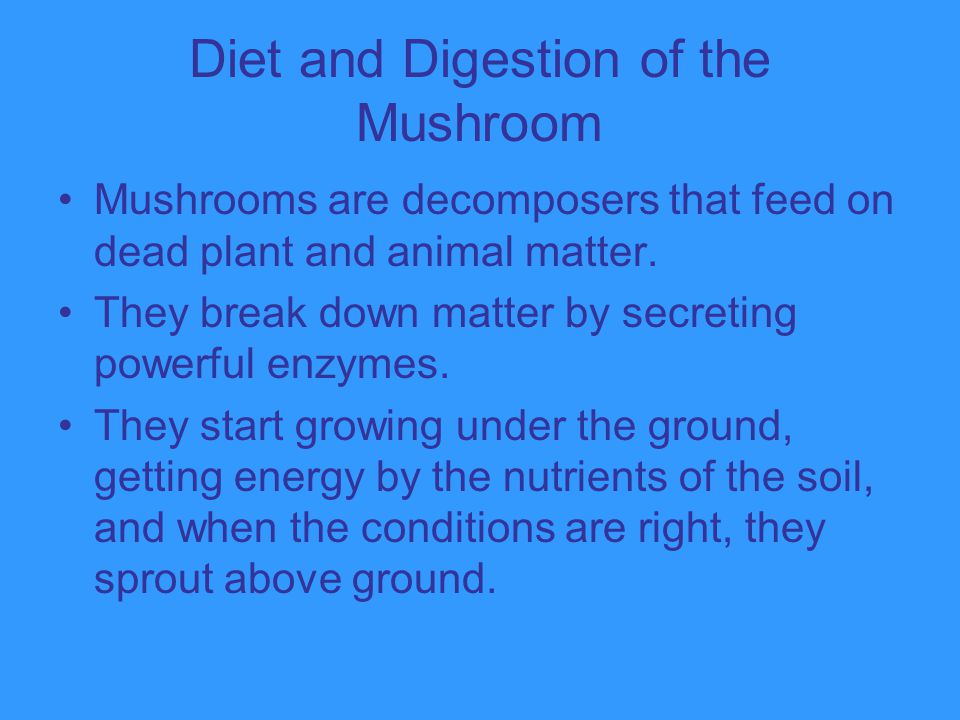 Diet and Digestion of the Mushroom Mushrooms are decomposers that feed on dead plant and animal matter. They break down matter by secreting powerful e