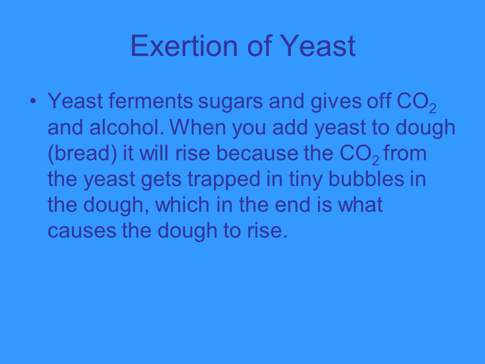 Exertion of Yeast Yeast ferments sugars and gives off CO 2 and alcohol. When you add yeast to dough (bread) it will rise because the CO 2 from the yea