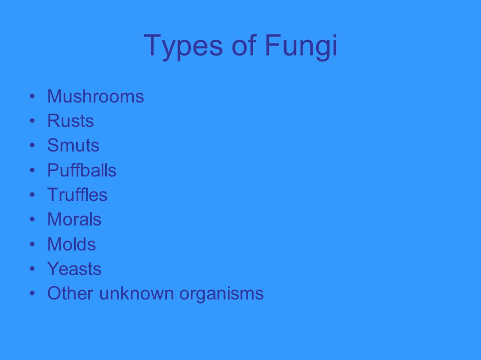 Types of Fungi Mushrooms Rusts Smuts Puffballs Truffles Morals Molds Yeasts Other unknown organisms
