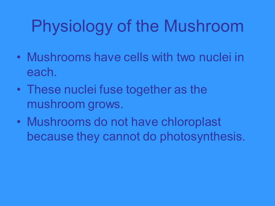 Physiology of the Mushroom Mushrooms have cells with two nuclei in each. These nuclei fuse together as the mushroom grows. Mushrooms do not have chlor