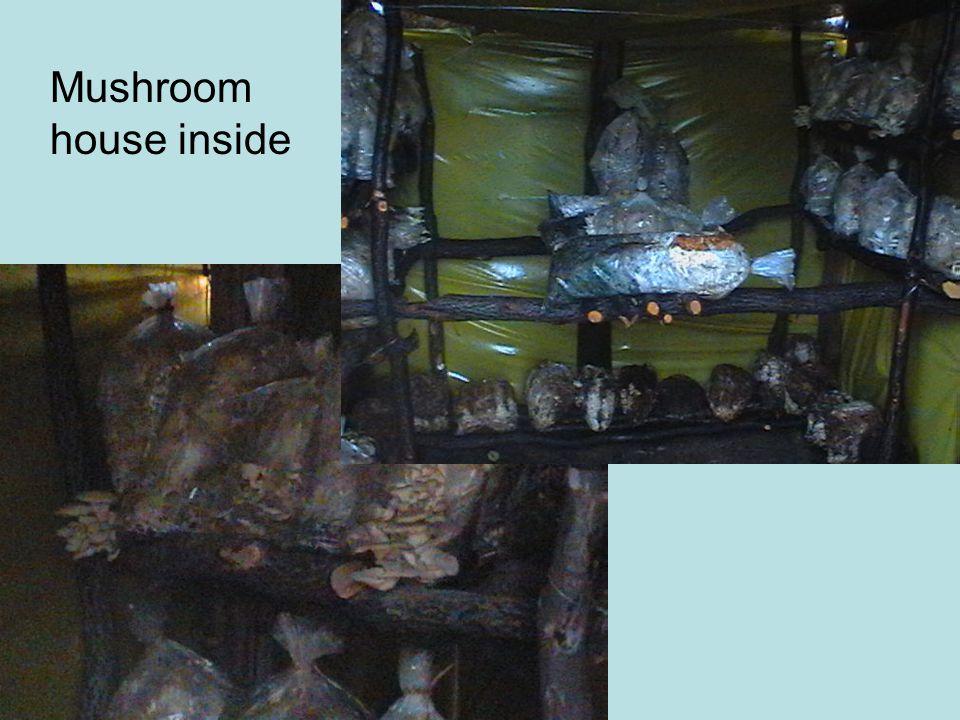 Mushroom house inside