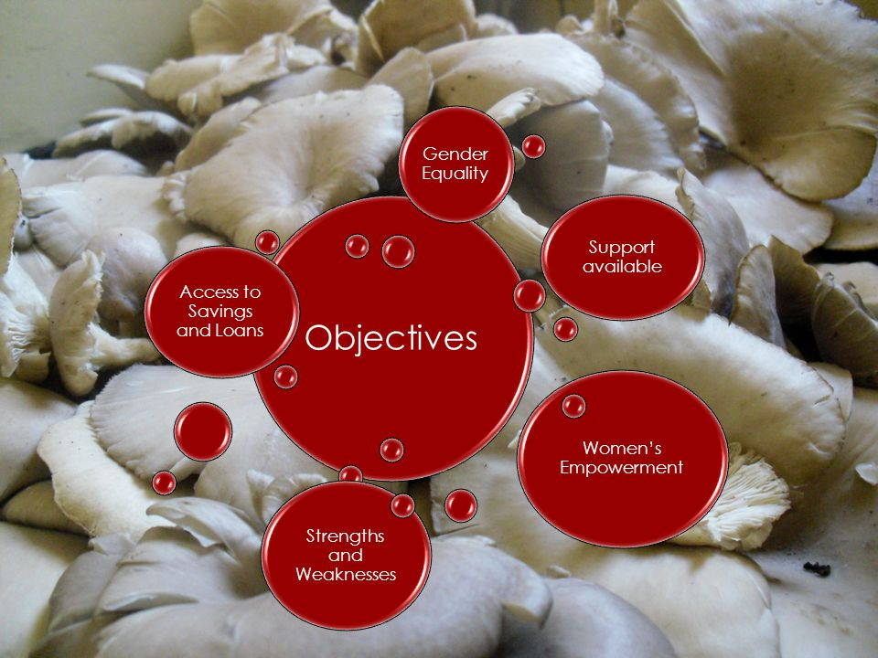 Objectives Access to Savings and Loans Support available Women's Empowerment Strengths and Weaknesses Gender Equality