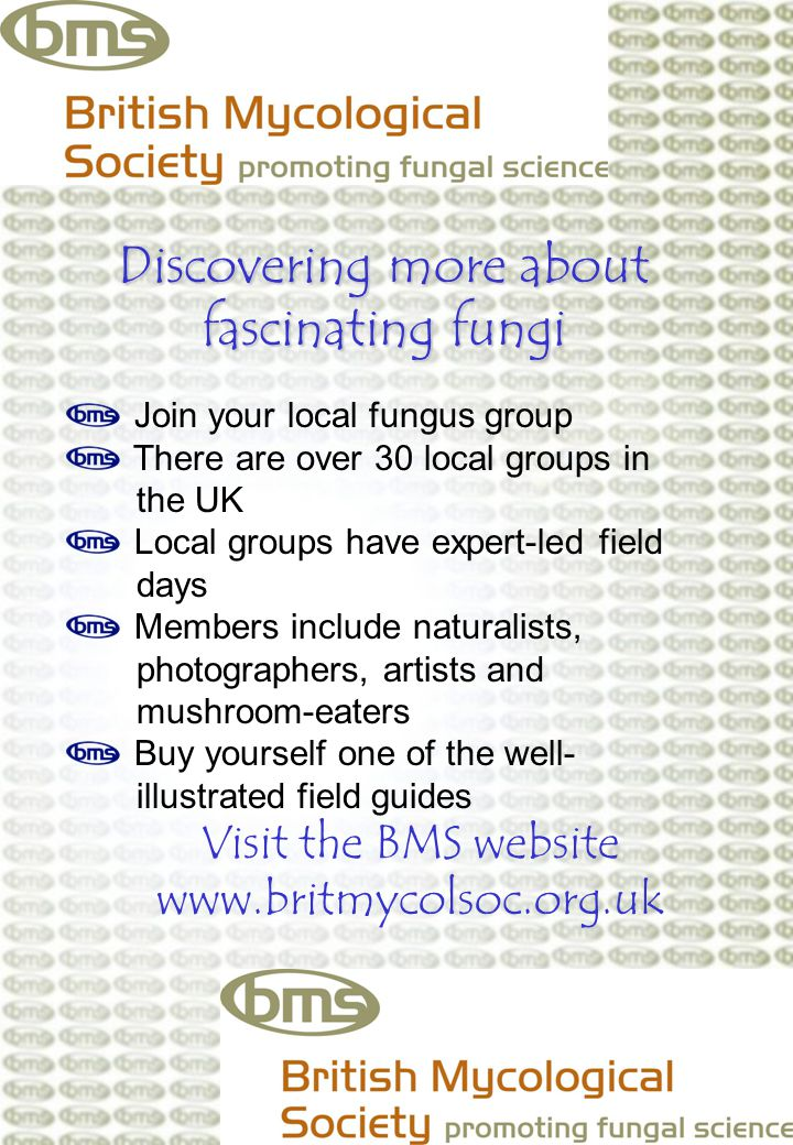 Discovering more about fascinating fungi Join your local fungus group There are over 30 local groups in the UK Local groups have expert-led field days