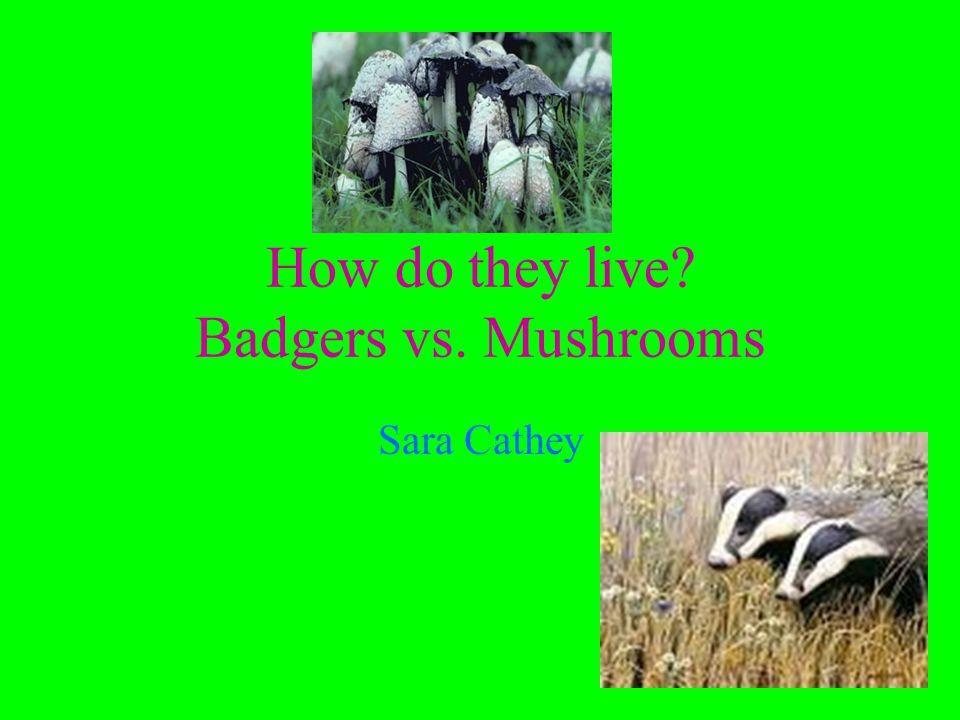 How do they live Badgers vs. Mushrooms Sara Cathey