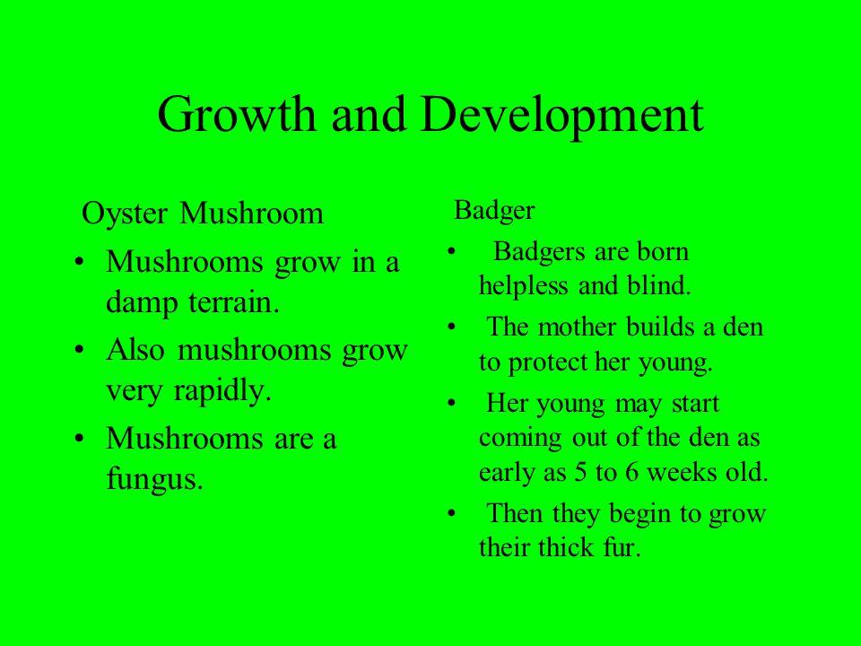 Growth and Development Oyster Mushroom Mushrooms grow in a damp terrain.