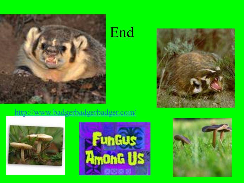 End http://www.badgerbadgerbadger.com/