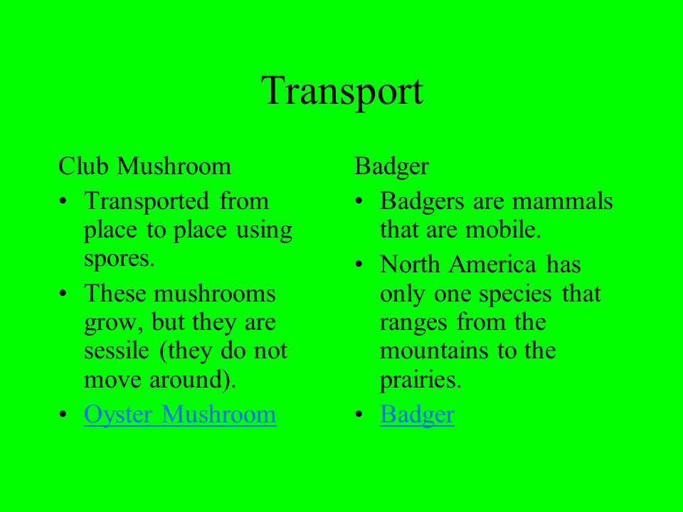 Transport Club Mushroom Transported from place to place using spores.