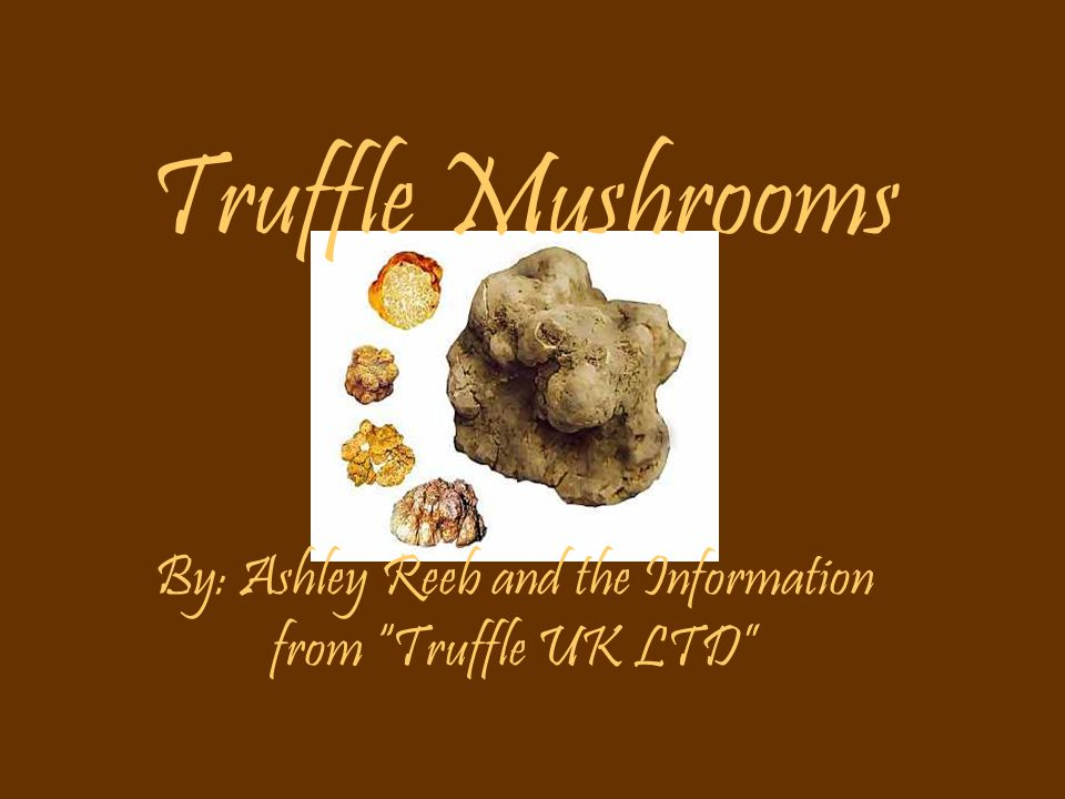 """Truffle Mushrooms By: Ashley Reeb and the Information from """"Truffle UK LTD"""""""