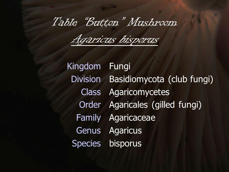 "Table ""Button"" Mushroom Agaricus bisporus Kingdom Division Class Order Family Genus Species Fungi Basidiomycota (club fungi) Agaricomycetes Agaricales"
