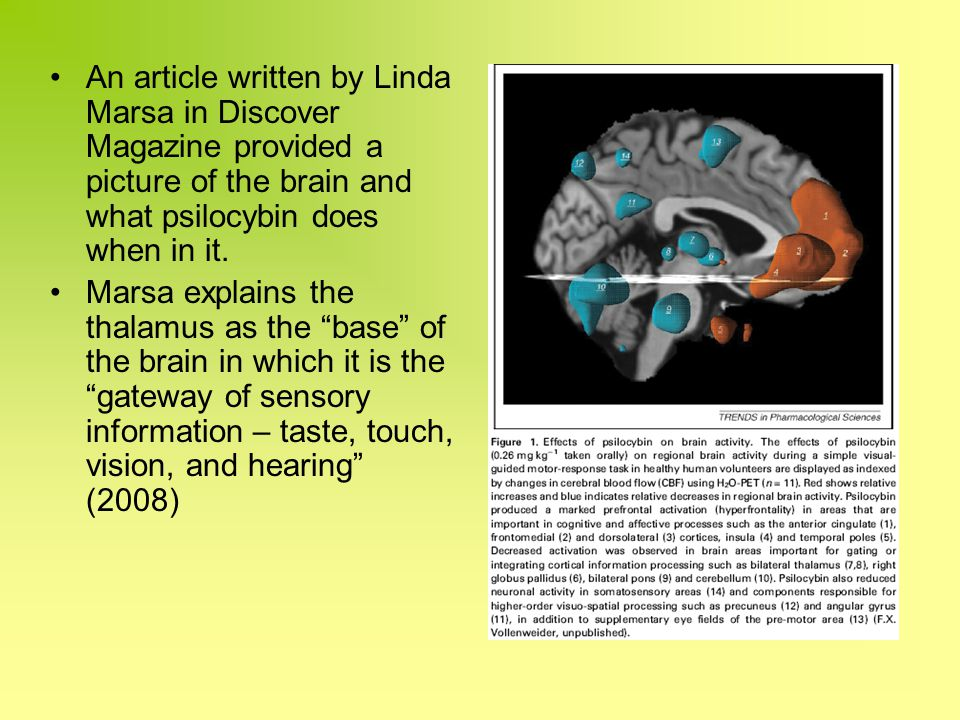 An article written by Linda Marsa in Discover Magazine provided a picture of the brain and what psilocybin does when in it.