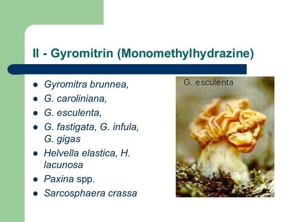 II - Gyromitrin (Monomethylhydrazine) Gyromitra brunnea, G.