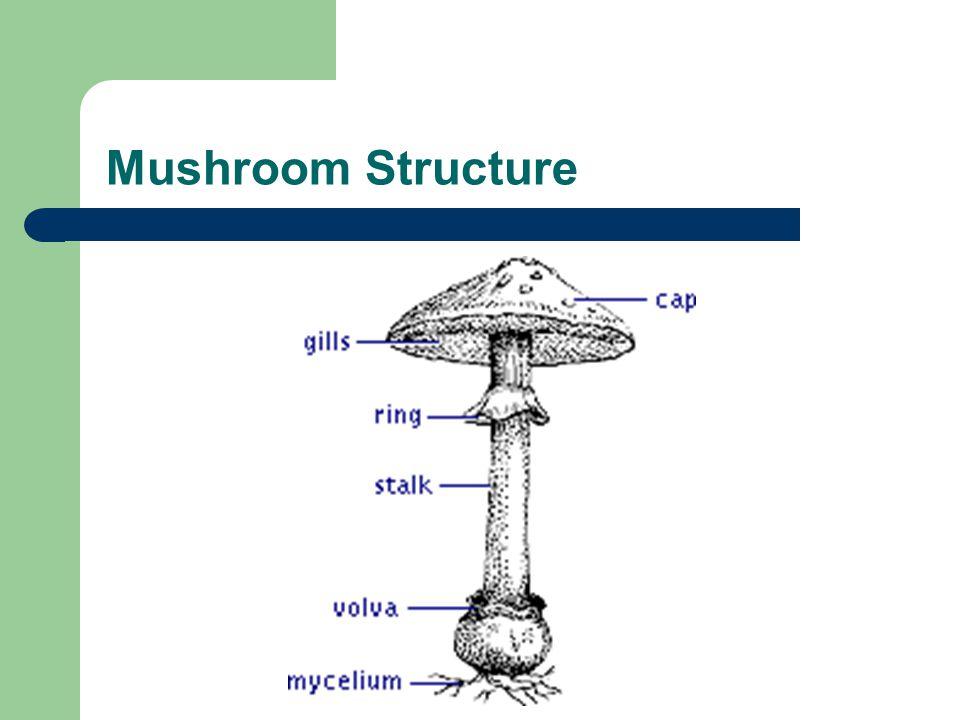 Mushroom Structure