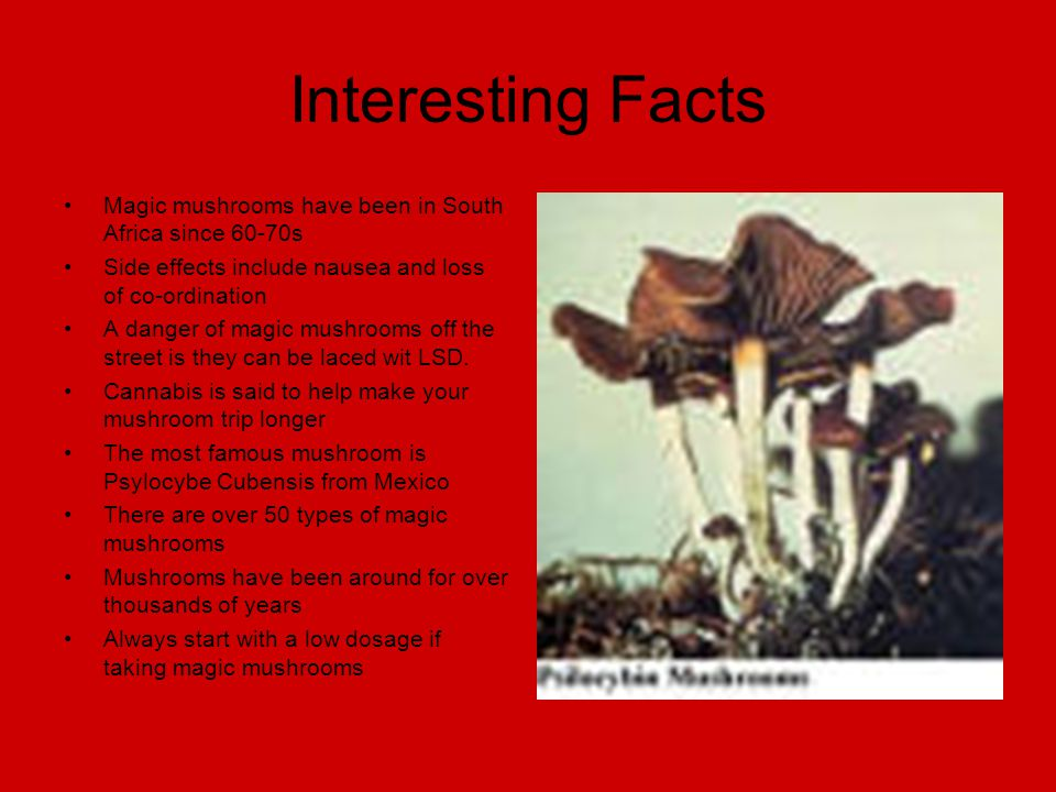 Interesting Facts Magic mushrooms have been in South Africa since 60-70s Side effects include nausea and loss of co-ordination A danger of magic mushrooms off the street is they can be laced wit LSD.