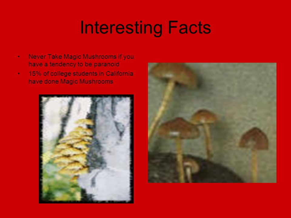 Interesting Facts Never Take Magic Mushrooms if you have a tendency to be paranoid 15% of college students in California have done Magic Mushrooms